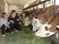 Urlaub auf dem Bauernhof / Ferienhof bei Passau