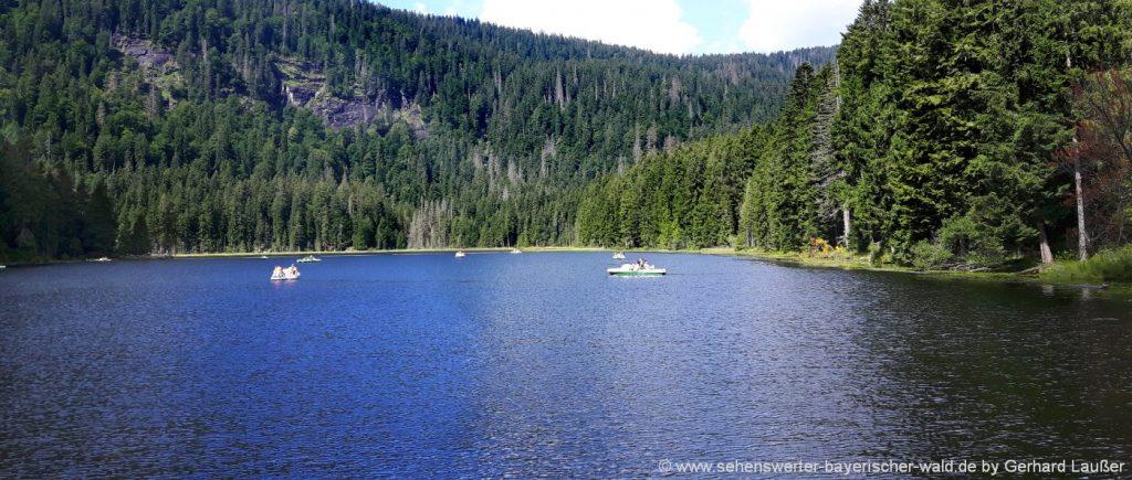 Ökosystem Bayerischer Wald große Arbersee mit Arberseewand