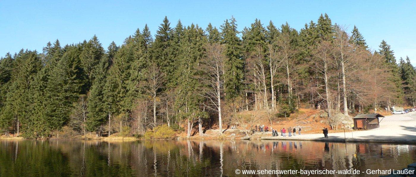 Wandern am großen Arbersee Rundwanderweg Bayerischer Wald