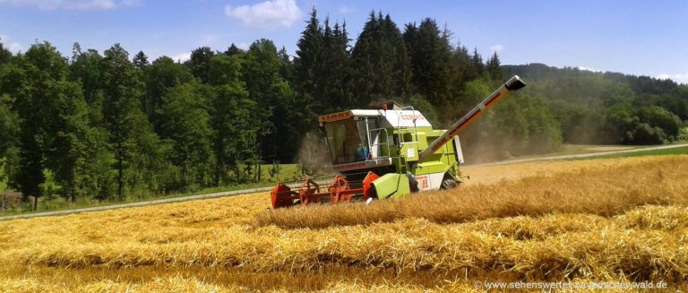 bauernhofurlaub-bayerischer-wald-herbsturlaub-getreideernte