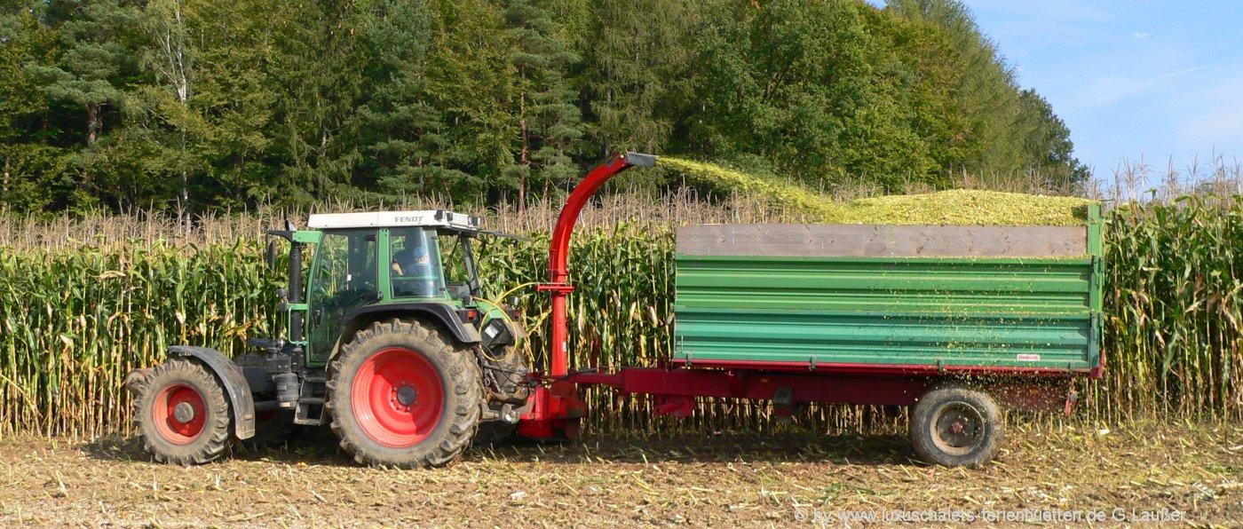 Bauernhofurlaub bei Cham Bauernhof Urlaub mit Maisernte und Traktor fahren