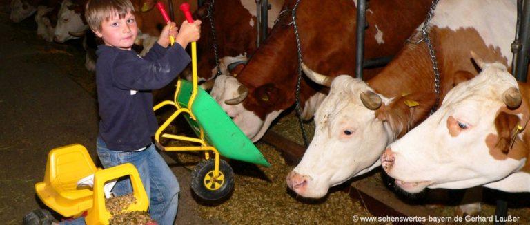 bauernhofurlaub-bayerischer-wald-kinder-kühe-füttern