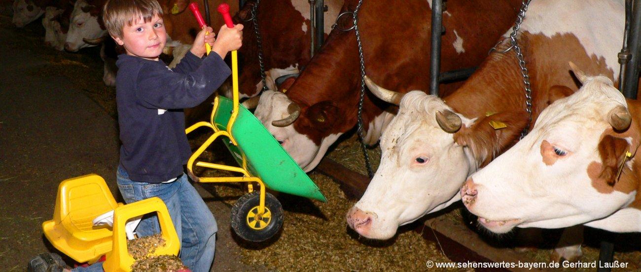 Mitmach Bauernhof in Bayern Mithelfen am Hof beim Kühe füttern