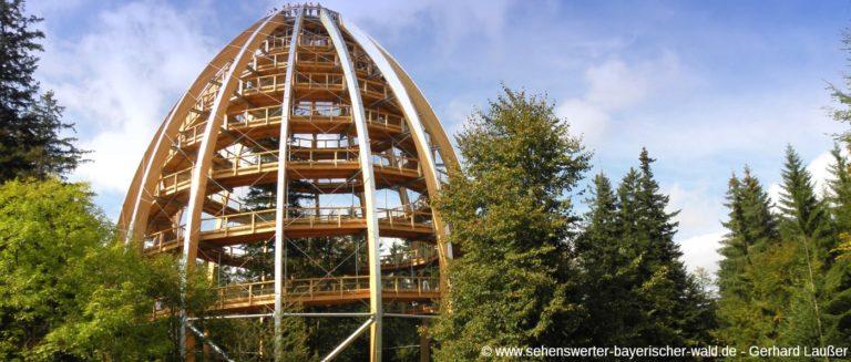 baumkronenweg-nationalpark-bayerischer-wald-baumwipfelpfad-panorama
