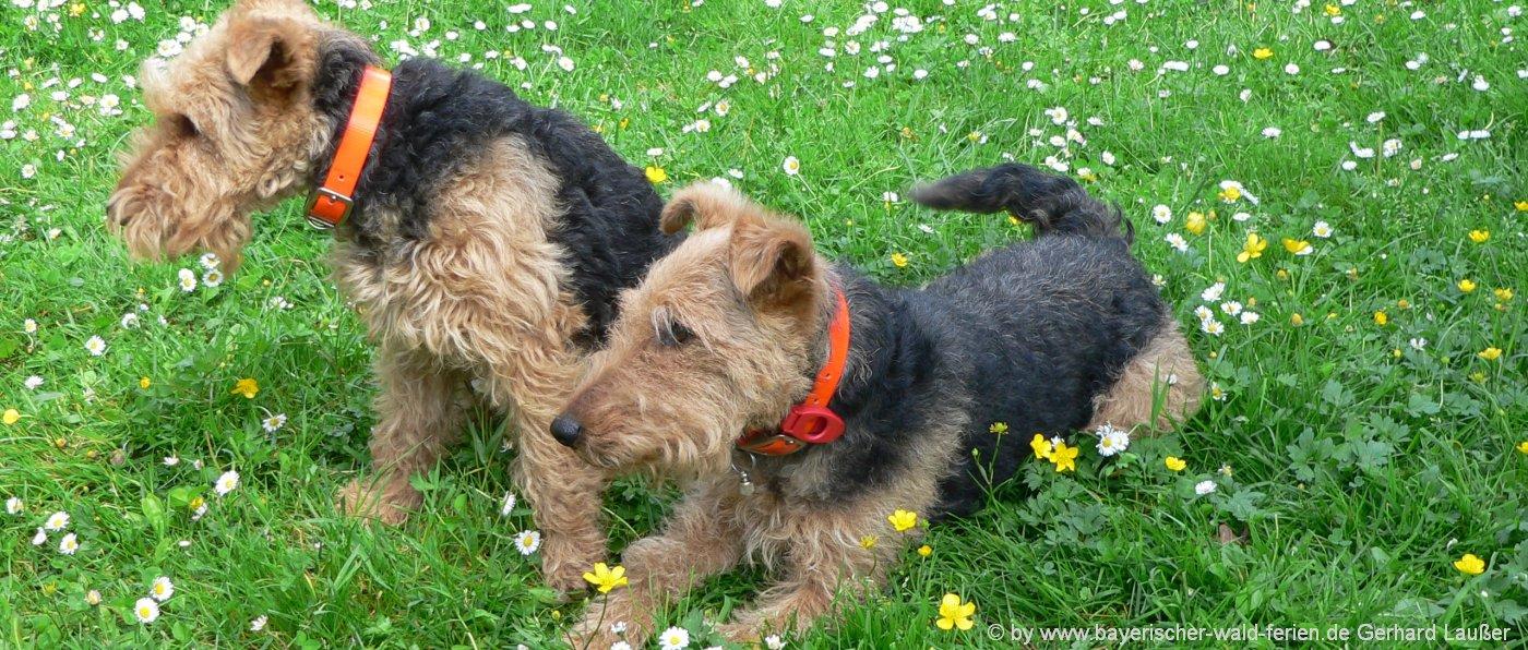 Bayerischer Wald Bauernhofurlaub mit Hund und Haustier