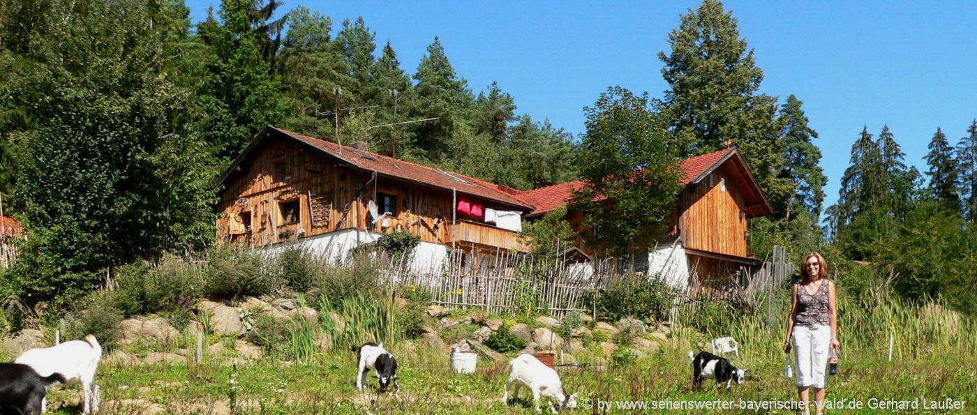 bayerischer-wald-hütten-mieten-10-20-30-personen-gruppenhaus-selbstversorger