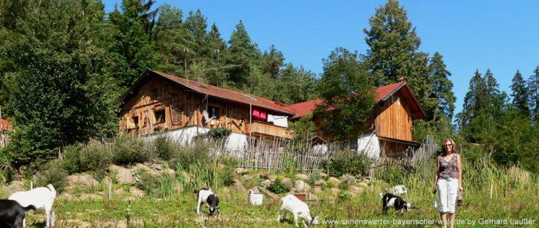 berghütten-bayerischer-wald-ferienhütten-mieten-bayern