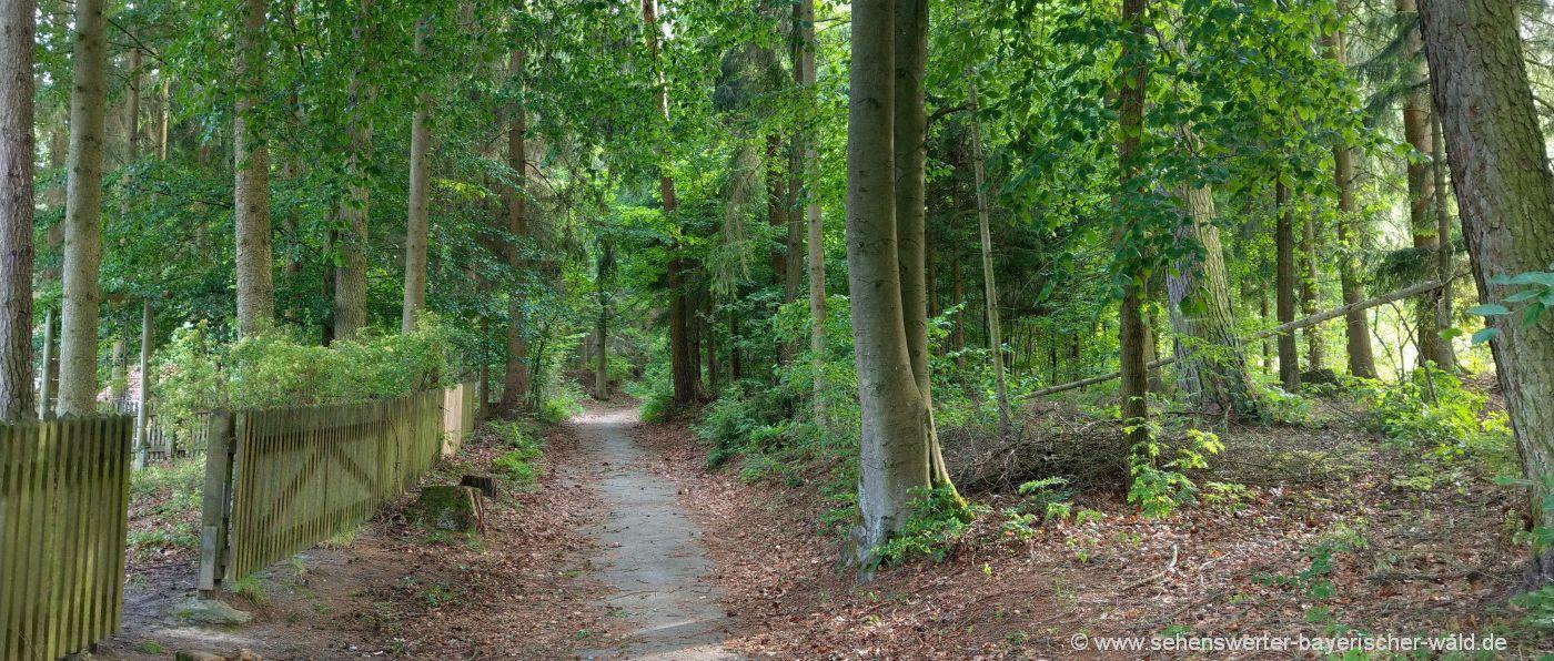 blaibach-wandern-rundweg-ziegelberg-lehrpfad-oberpfalz