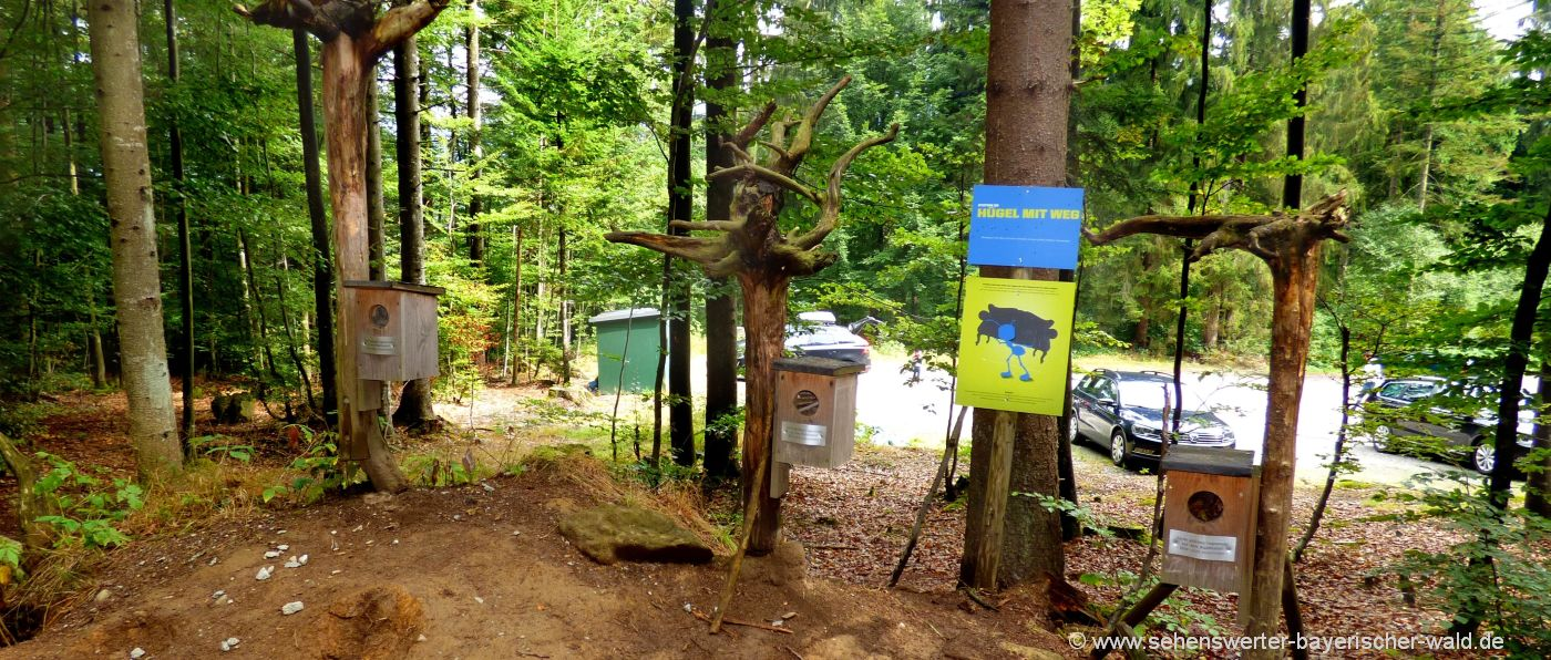naturerlebnispfad-bodenmais-ameisenpfad-bayerischer-wald