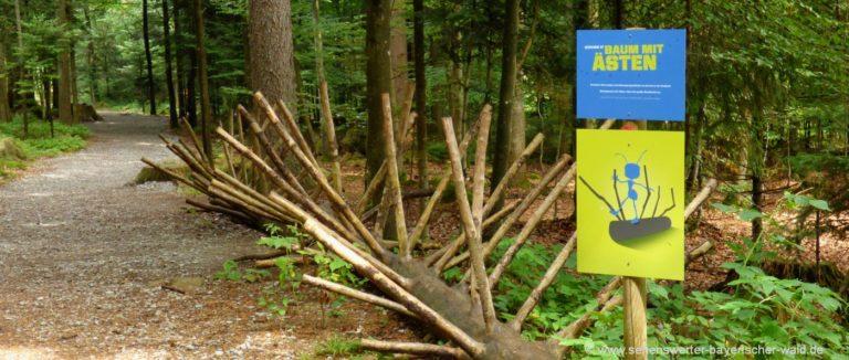 bodenmais-ameisenweg-kinder-familienwanderweg-bayerischer-wald