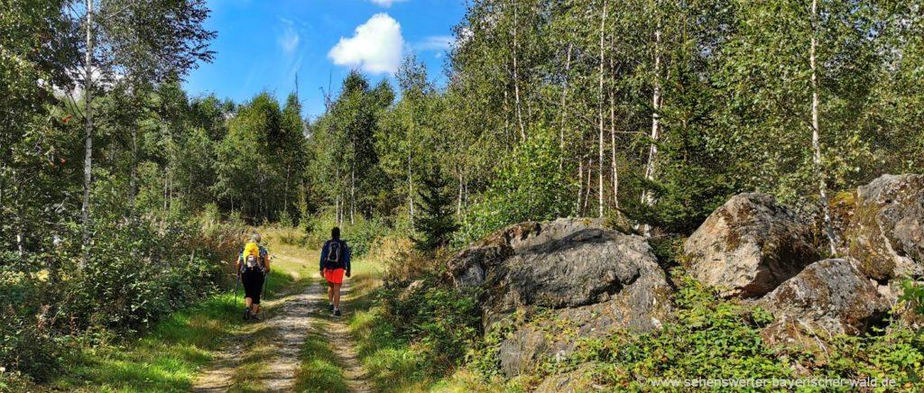 Wanderung zur Gutsalm Harlachberg Rundweg ab Bodenmais