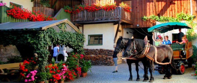 brechenmacherhof-bayerischer-wald-bauernhofurlaub-pferden