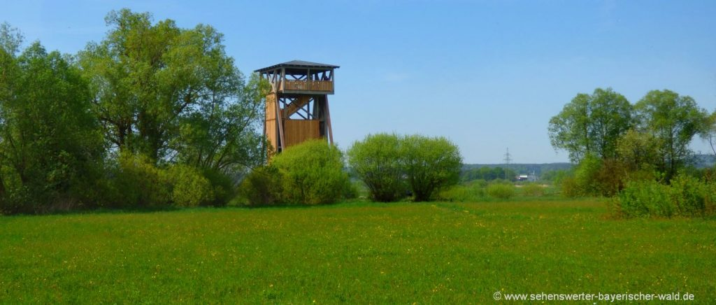 cham-regental-aussichtsturm-untertraubenbach-wandern