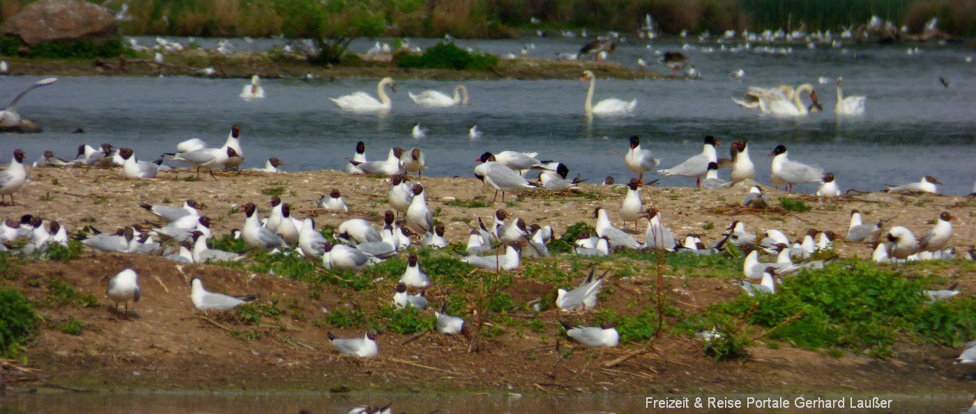 Naturschutzgebiet Rötelseeweiher Vogelschutzgebiet bei Cham