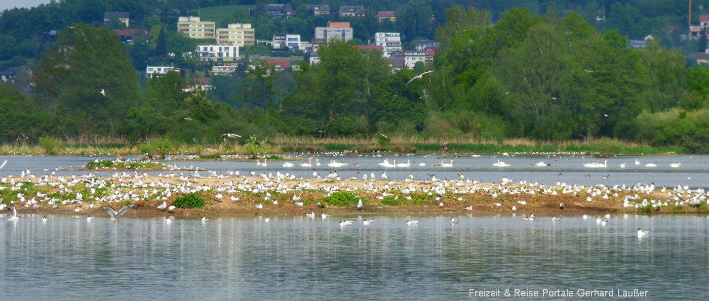 Vogel Insel im Rötelseeweihergebiet Rundweg bei Cham und Laichstätt