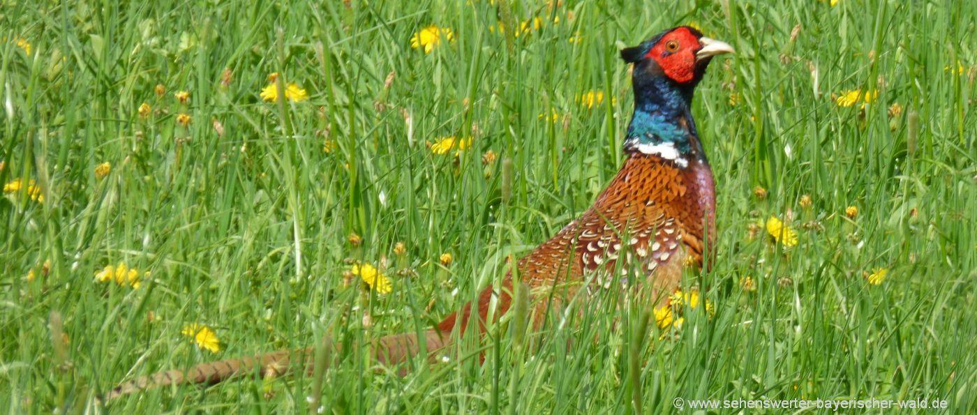 cham-vogelschutzgebiet-rötelseeweiher-wanderung