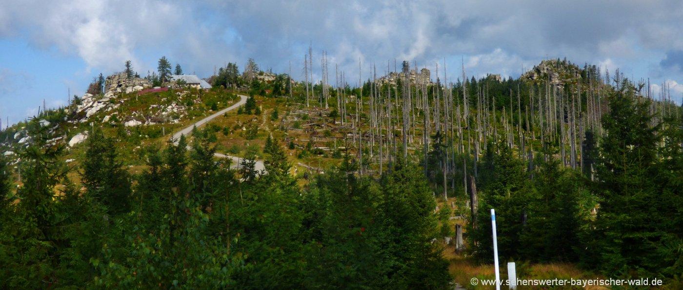 dreisesselberg-wandern-gipfel-bayerischer-wald-wanderung-dreiländereck