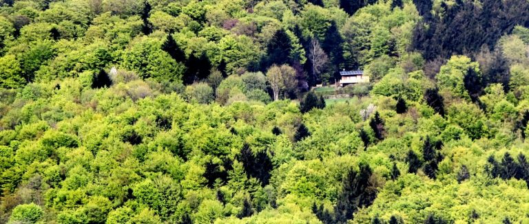 eder-paaradies-einsames-ferienhaus-brotjacklriegel-berghütten-sonnenwald