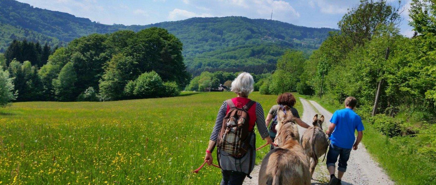 eselhof-bayerischer-wald-eselwanderungen-niederbayern-eselsafari