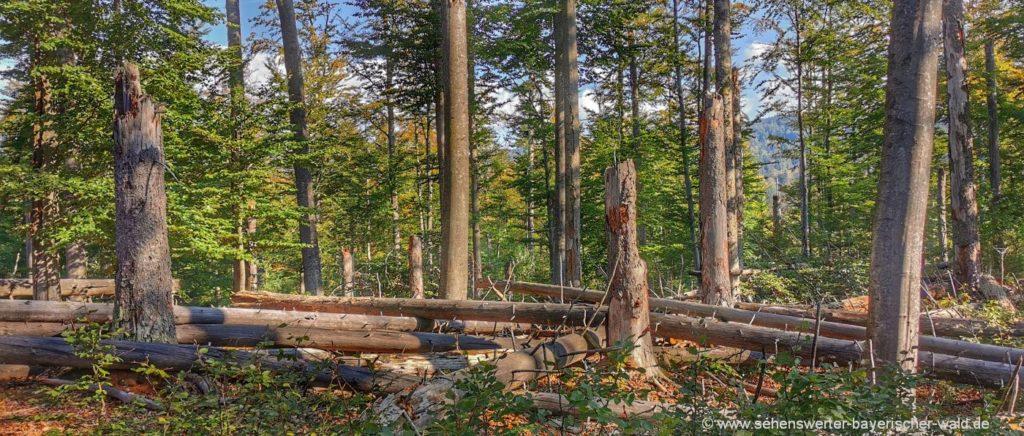 Felsenwandergebiet & Urwald wanderung Bayerischer Wald