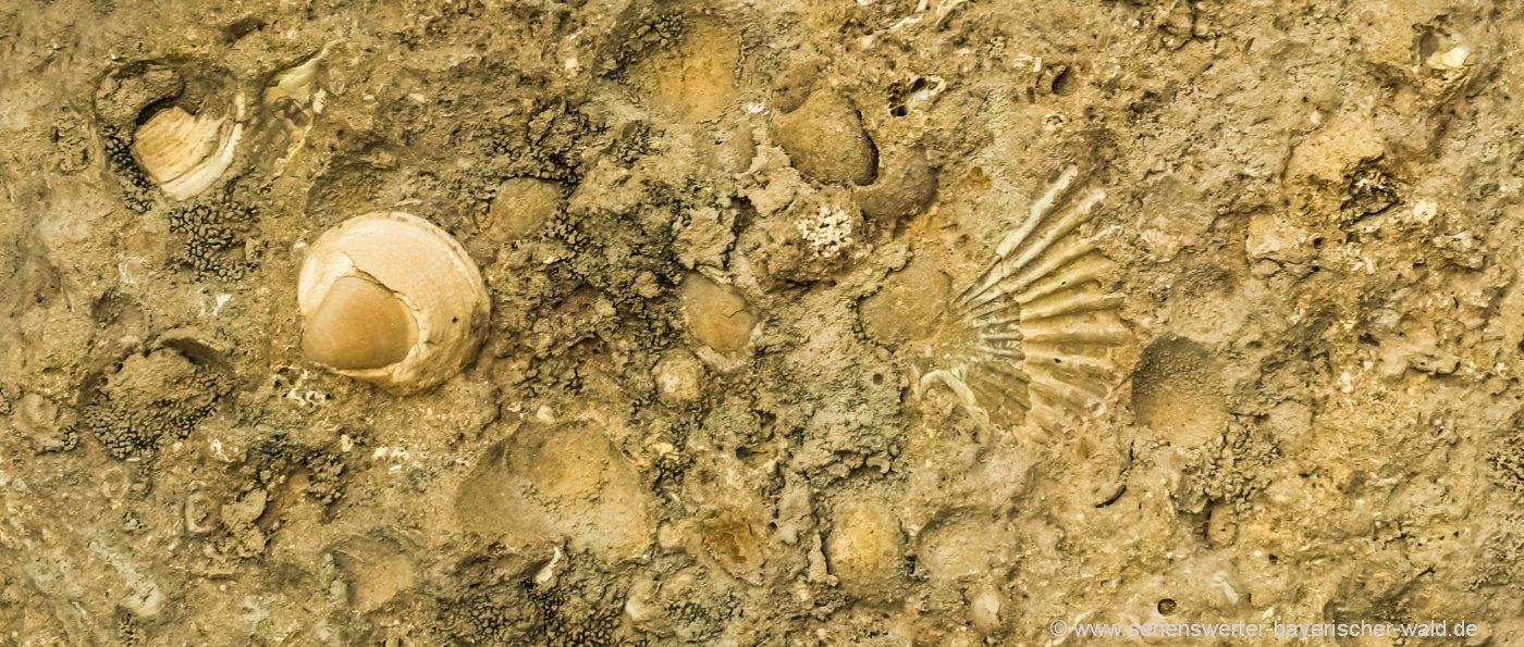 Besuchersteinbruch im Altmühltal bester Steinbruch Fossilien sammeln