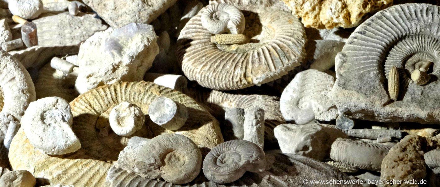 Fossiliensteinbruch im Altmühltal Steinbrüche zum Fossilien sammeln