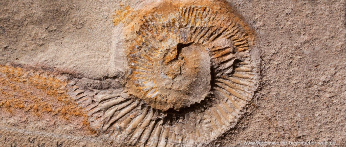fossiliensteinbruch-altmühltal-besuchersteinbruch-fossilien-sammeln