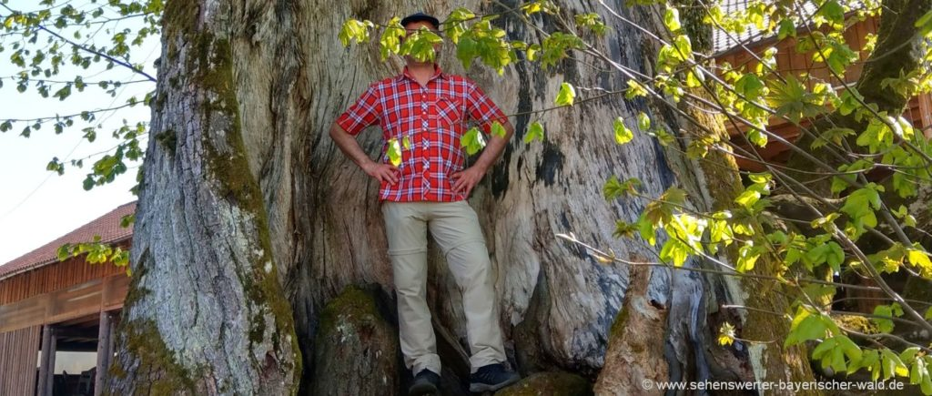 frath-wandern-drachselsried-rundwanderweg-highlights
