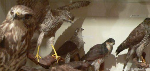 freyung-museen-jagd-wild-fluss-fischereimuseum-falken