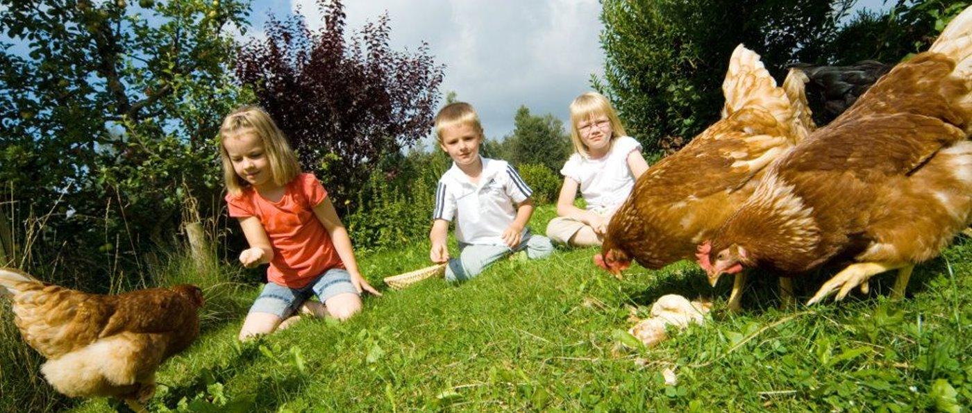 Urlaub am Bauernhof in Sankt Englmar Bauernhofurlaub Hühner füttern