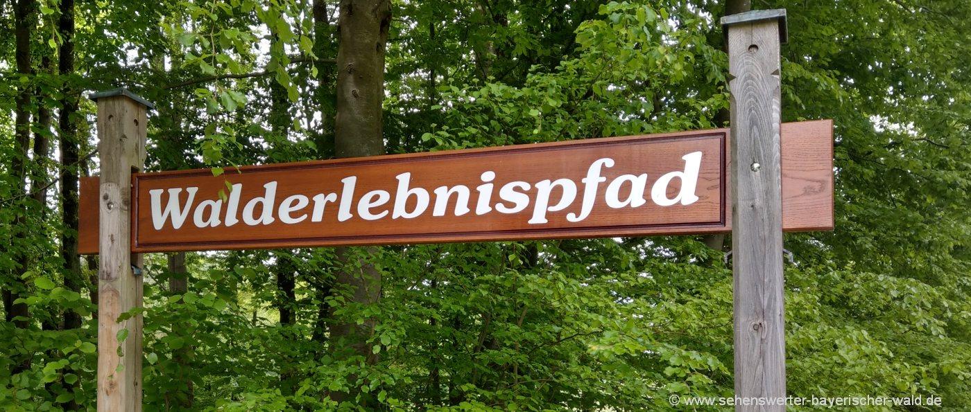 furth-im-wald-voithenberg-walderlebnispfad-rundwanderweg