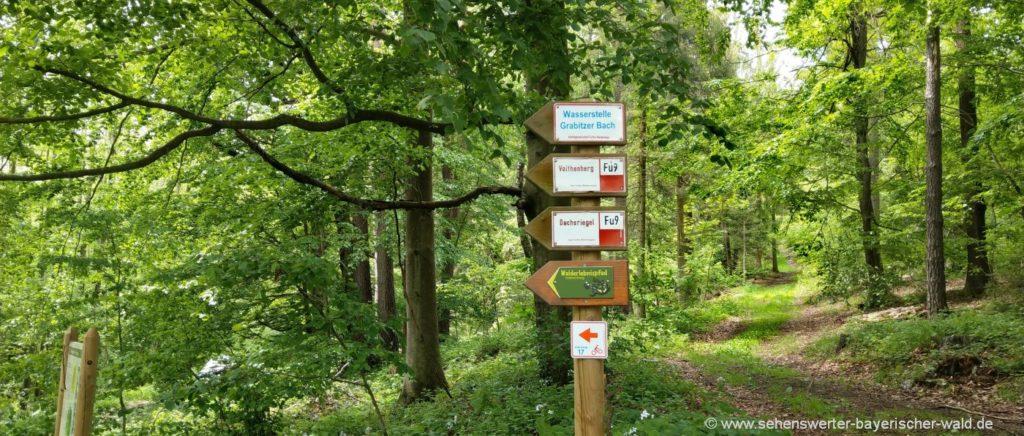 Furth im Wald Wanderwege am Voithenberg Wald Erlebnispfad Rundweg