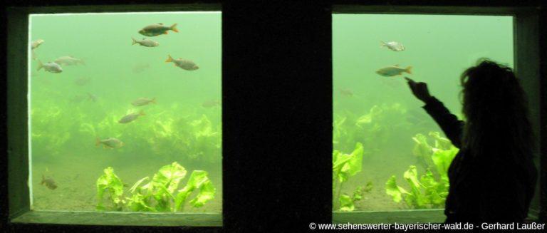 furth-im-wald-wildgarten-unterwasser-beobachtungsstation-panorama
