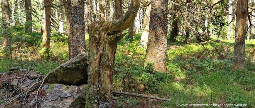 Zauberwald am Geißkopf Rundweg Ausflugsziel für Familienwanderung