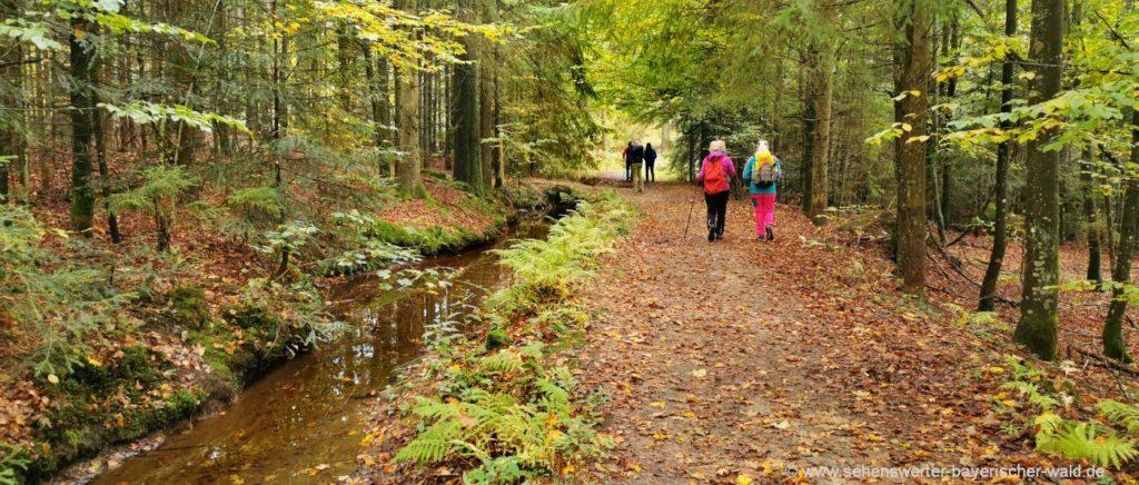 Wanderung am Mühlgraben Rundweg ab Grandsberg über Schuhfleck