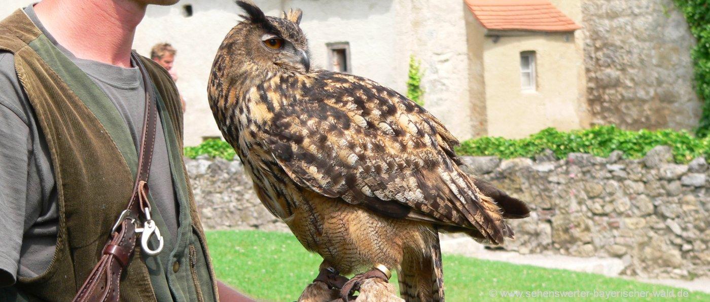 grafenwiesen-greifvogelpark-flugshow-bayern-sehenswürdigkeiten