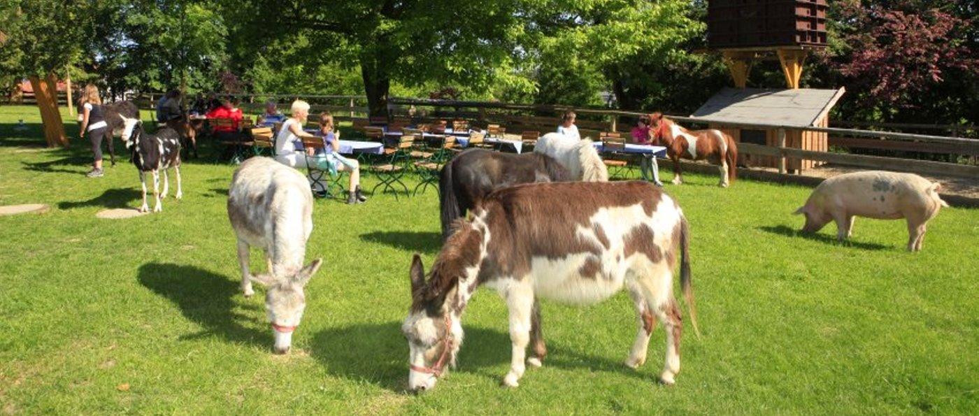Gut Aiderbichl Deggendorf der Tier Gnadenhof in Bayern