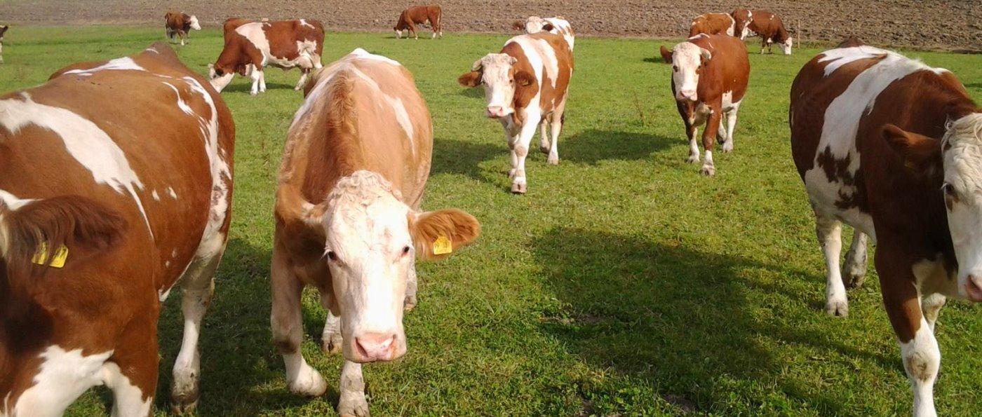 Tiere auf der Weide beim Bauernhofurlaub mit Halbpension im Bayerischen Wald