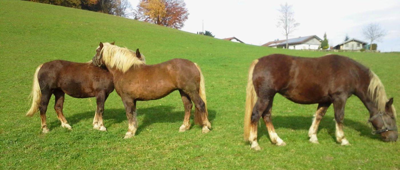 Pferde am Bauernhof von Stefan Hacker in Patersdorf Bayerischer Wald