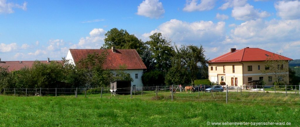 handlhof-kinder-bauernhof-mit-ponyreiten-bayerischer-wald