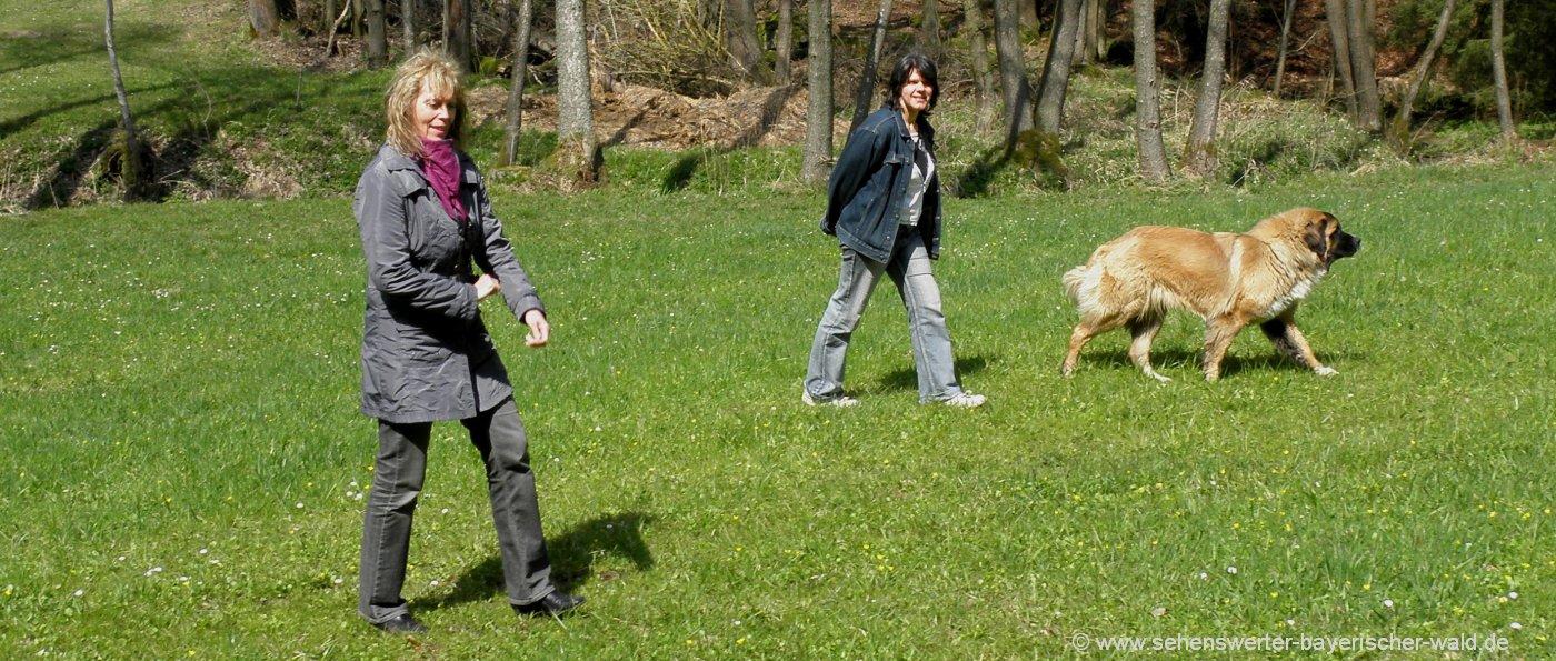 hunde-willkommen-bauernhofurlaub-mit-hund-bayerischer-wald-wiese