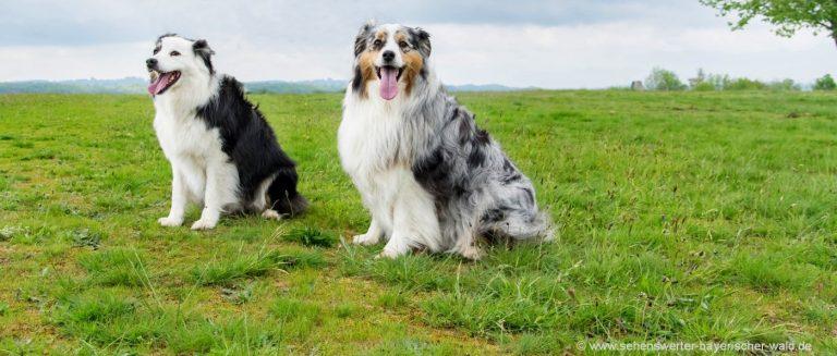 hundefreundlicher-urlaub-bayerischer-wald-urlaub-mit-hunden-erlaubt