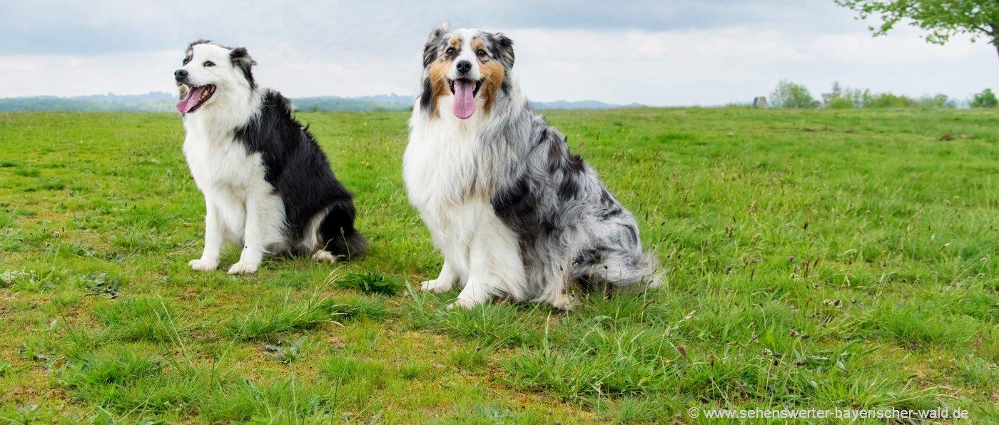 Urlaub mit Hund in Bayern Ferien mit Haustier im Bayerischen Wald