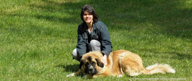 hundfreundliche-hotels-bayerischer-wald-urlaub-mit-hund