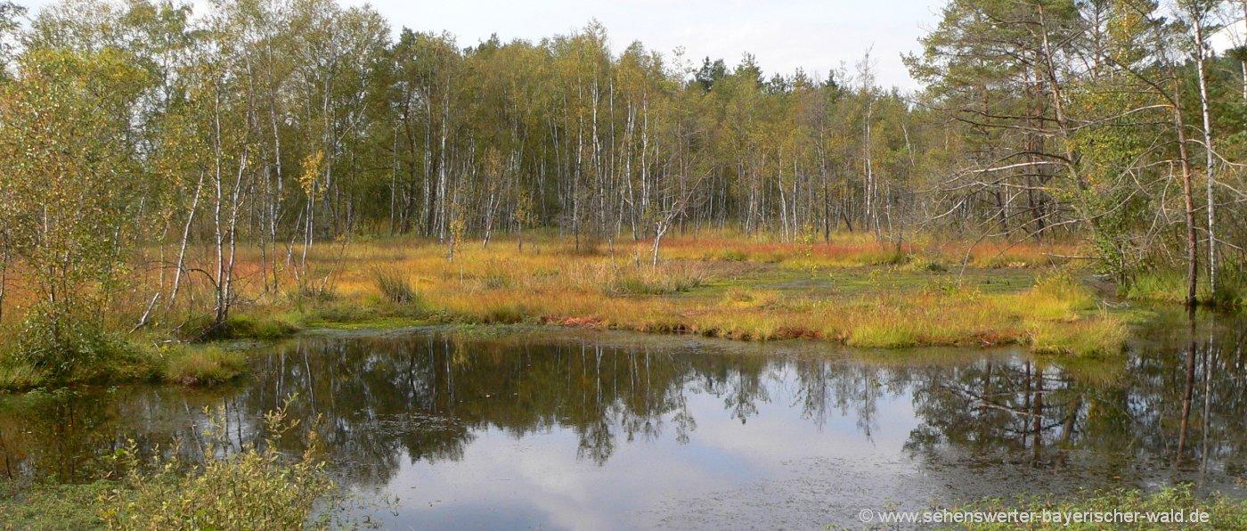 Sehenswürdigkeiten Oberpfälzer Wald Ausflugsziel Kulzer Moos