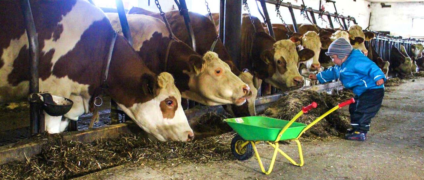 Bayerischer Wald Kinderland Bauernhof in Bayern mit vielen Tieren