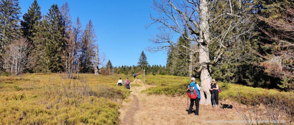 Einfache Wanderung ab Buchenau zu Lindbergschachten