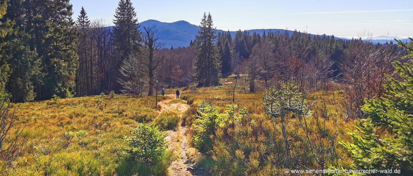 Ausdauernde Tageswandertouren mit 25 km Länge - Blick zum Rachel vom Lindberger Schachten