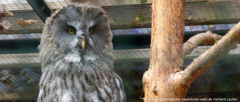 lohberg-bayerwald-tierpark-eule-bilder-zoo-bayerischer-wald-ausflugsziele