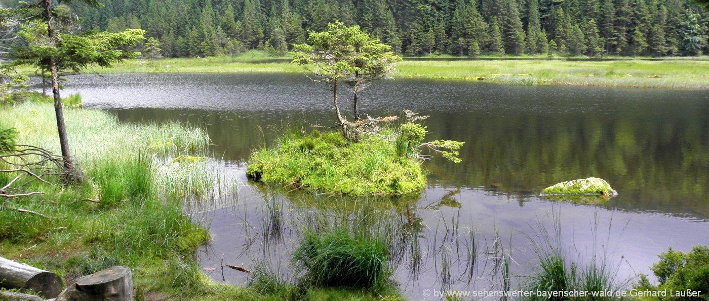 lohberg-kleiner-arbersee-rundwanderweg-schwimmende-inseln-ausflugstipp